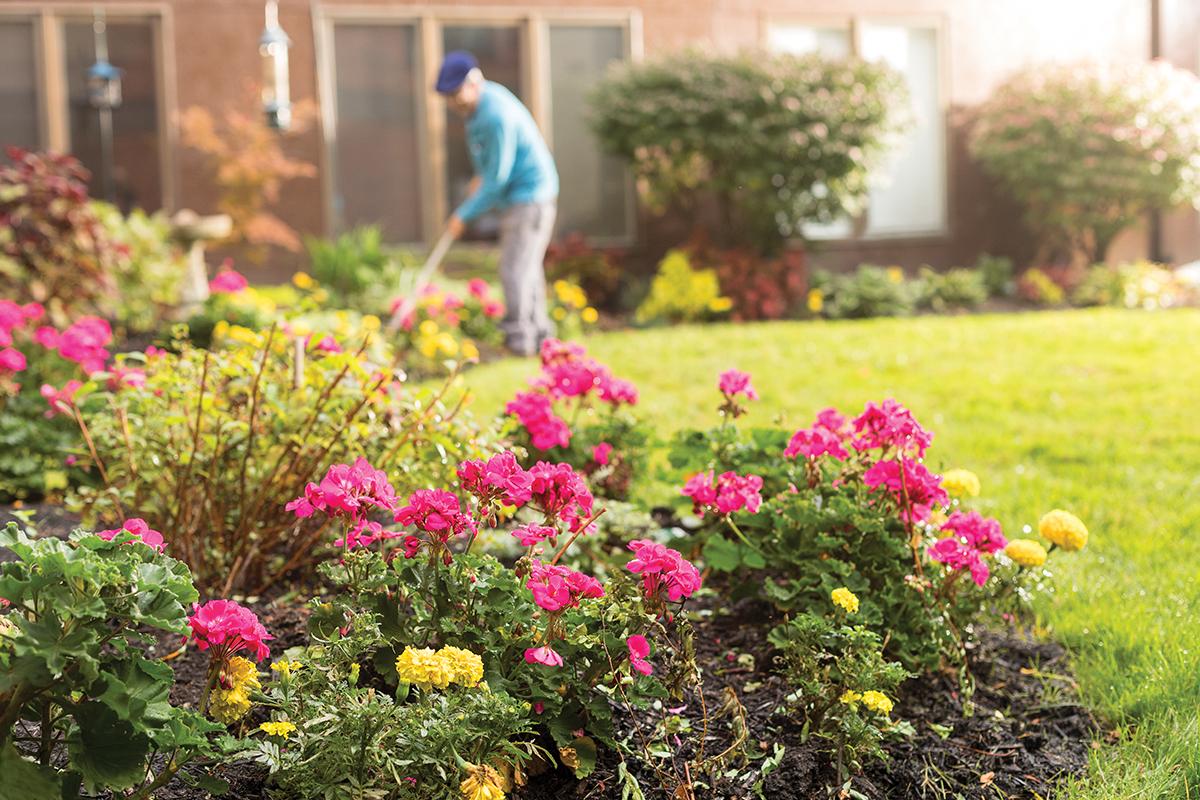 Gardening   Westerwood