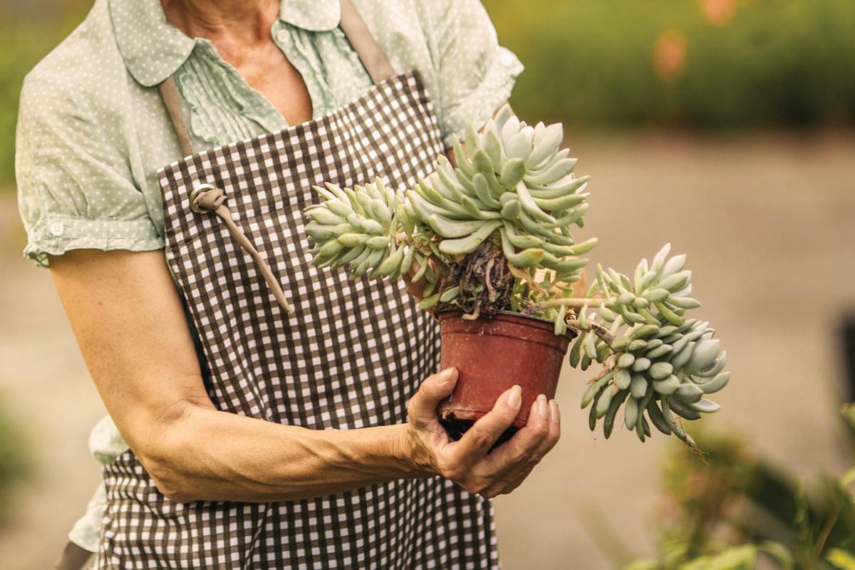 Gardener   Westerwood